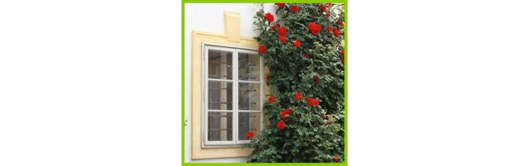 kletterrosen rosaplant. Black Bedroom Furniture Sets. Home Design Ideas